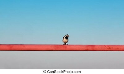 Little bird sits on orange tube at background of sky