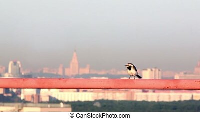 Little bird walks by orange tube at background of cityscape