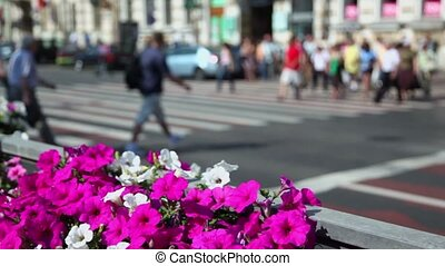 Lot of people walk by pedestrian crossroad, focus on flowers