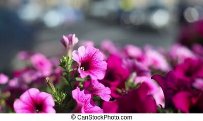 City day traffic, focus on flowers lit by sun light