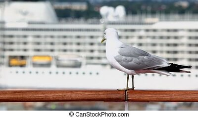 Mew sits on handrail in port with cruise ship at sunny day