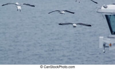 Several gulls flap and fly under water near deck-house and...