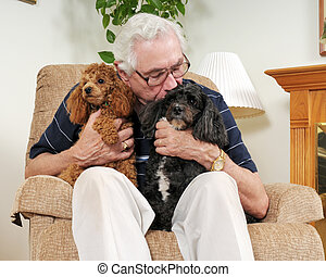 Kissing the Pooch - An elderly man holding his two poodles,...