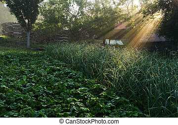 Sun rays in meadow with tree
