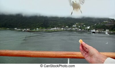 Hand hold piece of bread and gull flies to take it near...