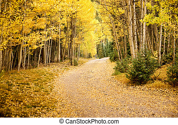 Autumn Lane - The pathway to autumn adventure in the...