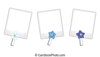 Blank Photos with Forget Me not Flowers - A Symbol of Love,...