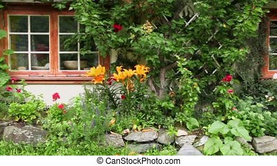 Norwegian country house among plants entwine walls, shown in...