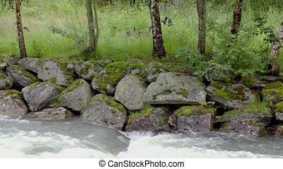 River stream below stones on shore under birches at summer...