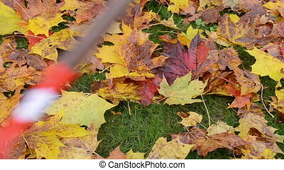 rake autumn leaves