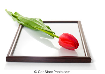 Tulip and photo frame