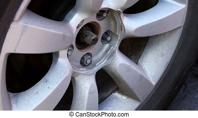 Man unscrew wheel nuts by automatic screwdriver, closeup...