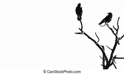 Silhouette of two crows in a tree
