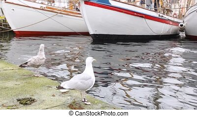 Two seagulls stand on pier near white sailing boats