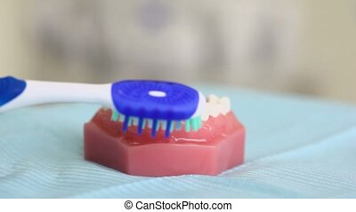 Teeth brush cleans bottom half of jaw on table in dental...