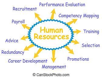 human, recursos