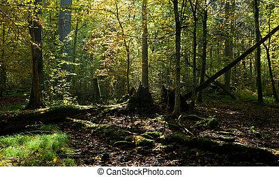 Old oak tree broken lying in autumnal ladscape od deciduous...