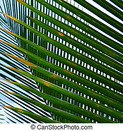 Coconut Leaves - Stock Photo - Pattern of green coconut...