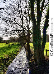 Tree lined stream in Cartmel, Cumbria - Peaceful view of a...