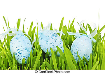 Easter eggs in green grass - Three blue speckled easter eggs...
