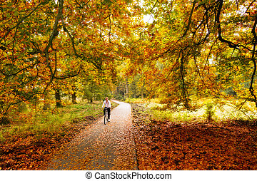 Autumn cycling - Cycling trough the woods in national park...