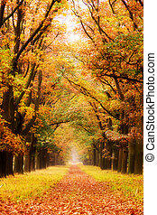 Autumn lane - Beautiful autumn forest in national park 'De...