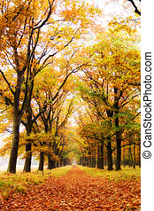 Autumn forest - Beautiful autumn forest in national park 'De...