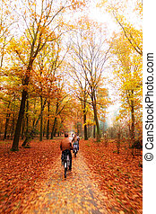 Veluwe autumn bicycle - Cycling trough the woods in national...