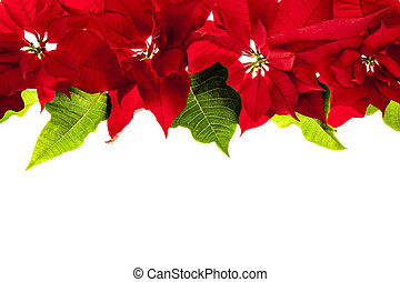 Christmas border with red poinsettias - Christmas border of...