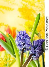 Mazzolino, primavera, fiori, mimosa