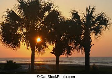 Sunrise Through Palm Trees - Sun rising through palm trees...