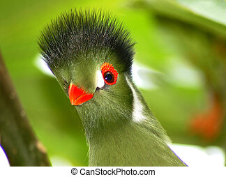 Green tropical bird