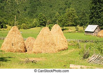Summer rural landscape with haystacks