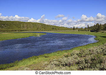Madison River in Yellowstone Park - The Madison River in...