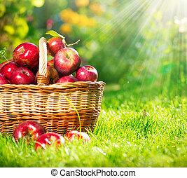 orgánico, manzanas, cesta, huerto, jardín