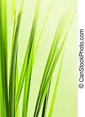 Green grass background - Natural background with green grass...
