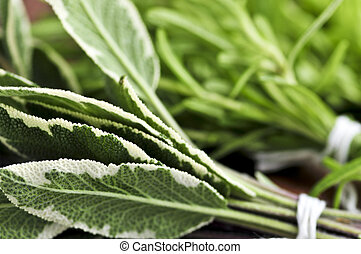 Bunches of fresh herbs - Bunches of assorted fresh herbs...