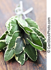 Bunch of fresh sage - Bunch of fresh herb sage close up on...
