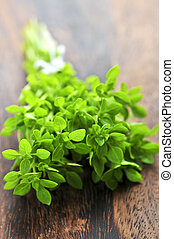 Bunch of fresh oregano - Bunch of fresh herb oregano close...