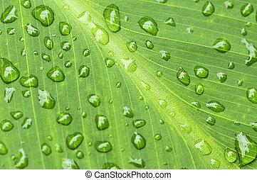 verde, folha, fundo, pingos chuva