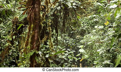 Waterfall in cloud forest - Small waterfall in cloud forest...