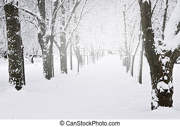 Lane in winter park with snow covered trees