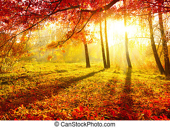秋天, 公園, 秋天, 樹, 離開, 秋天