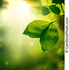 Nature Background. Green Leaves and Sunbeams