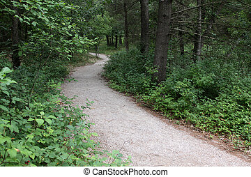Path in the Pinery - A trail in The Pinery Provincial Park,...