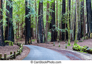 Road Through the Redwood Forest - A Road Leading Through the...