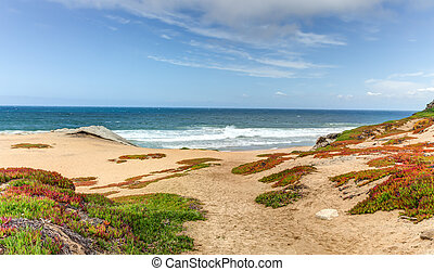Spring Beach Foliage at Monterey Bay, California.