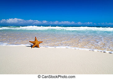 starfish with ocean , beach and seascape,