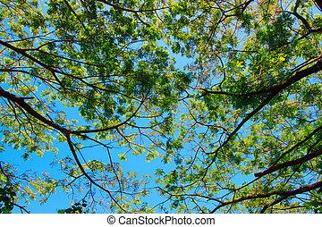 tree branches and blue sky
