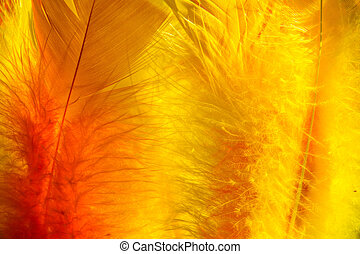 Colourful easter feathers in sunlight